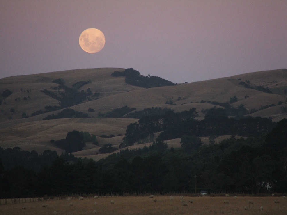 harvest moon in the Wairarapa hills