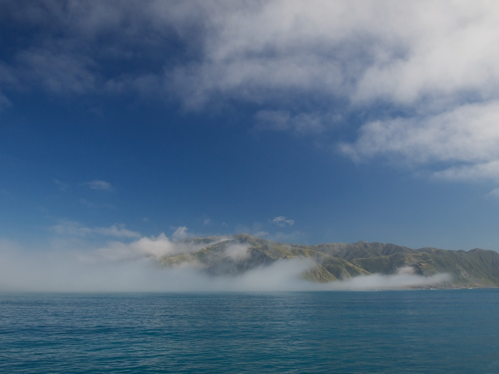 Fog on Wellington's South Coast; December 2011